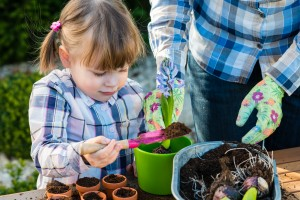 child girl planting flower bulbs with mother. Gardening planting concept - mother and daughter planting tulip and hyacinth bulbs into small pots ** Note: Visible grain at 100%, best at smaller sizes